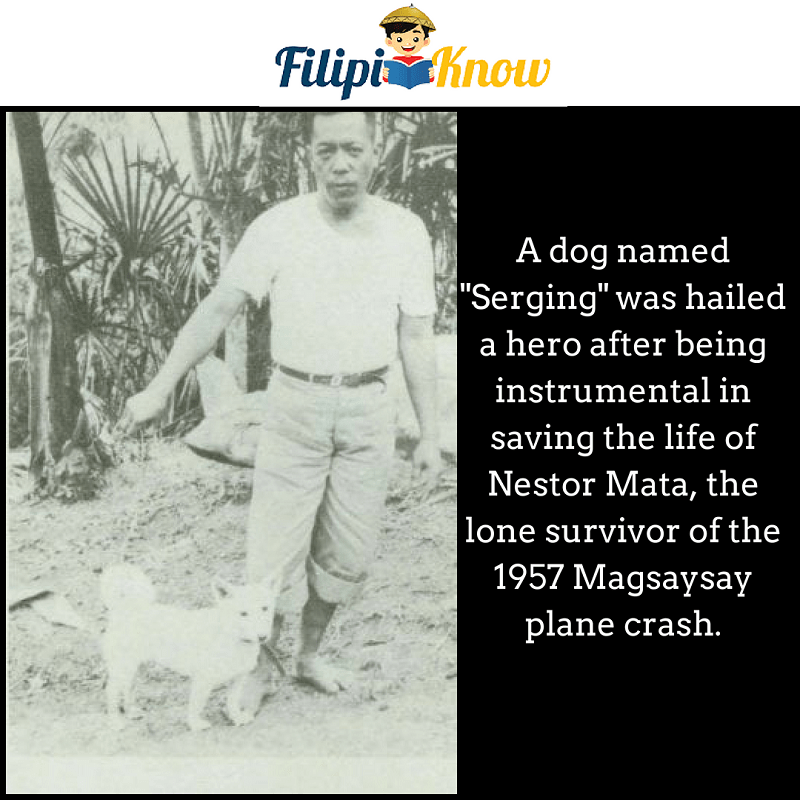 Serging hero dog in 1957 Magsaysay plane crash