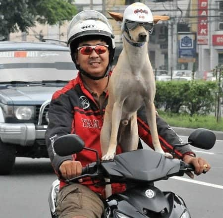 Bogie Rider + Philippine dog riding a motorcycle