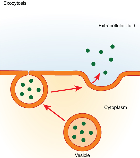 cell biology 14