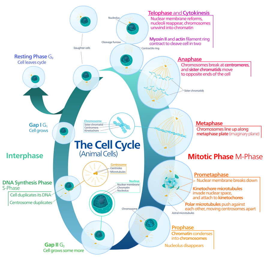 cell biology 18