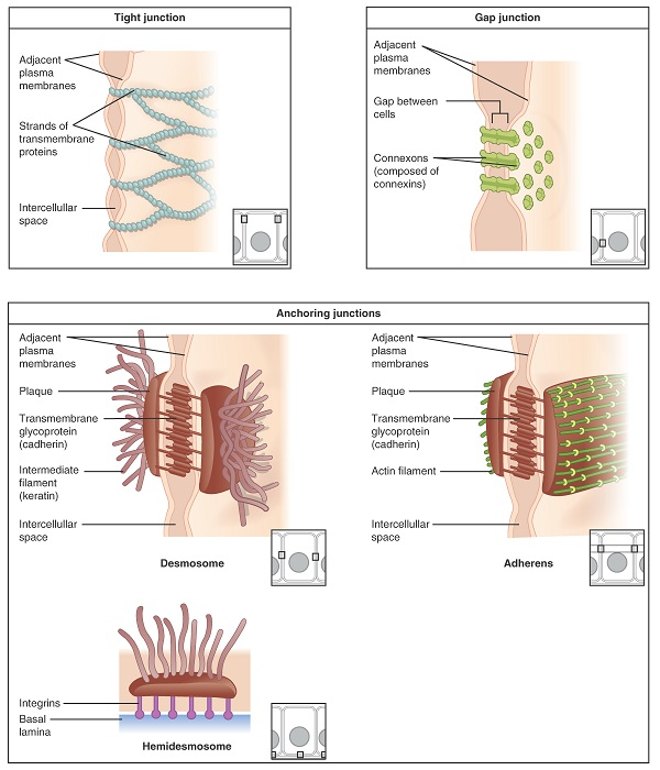 cell biology 8