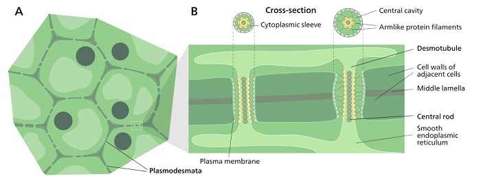 cell biology 9