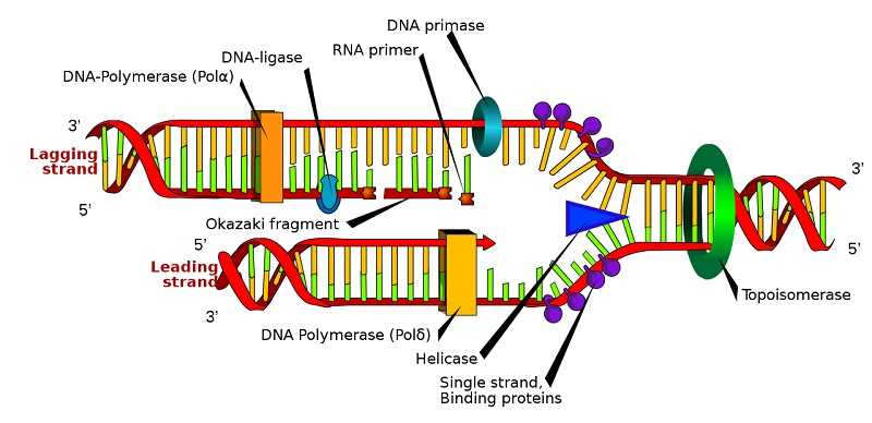 central dogma of biology 4